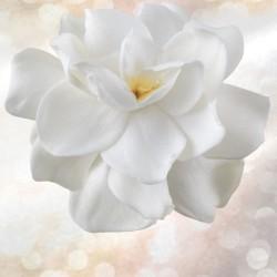 Gardenia reale